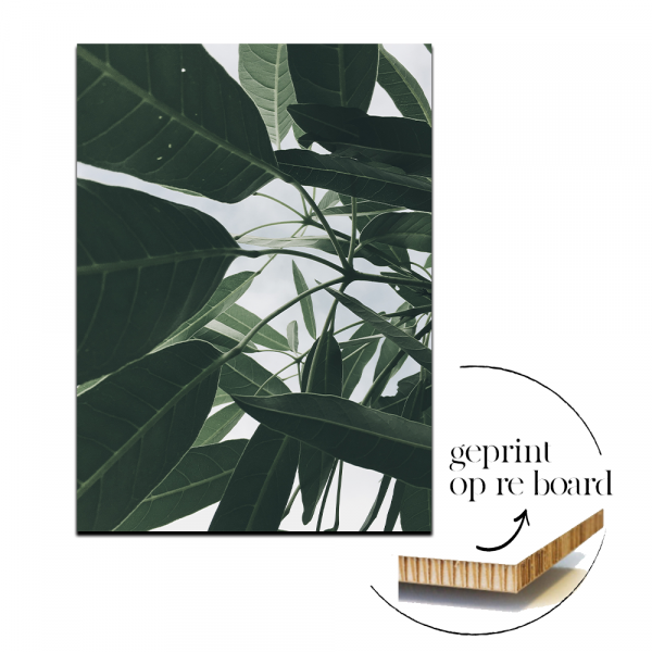 Poster op karton | Leaves