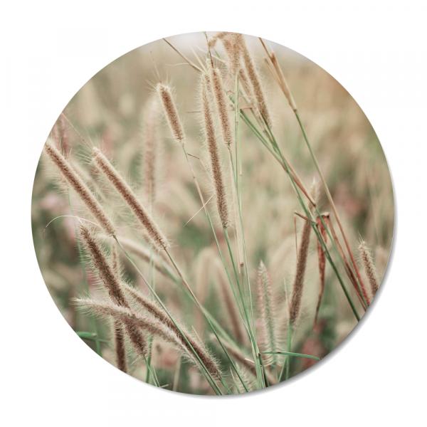 Cirkel - nature - grass