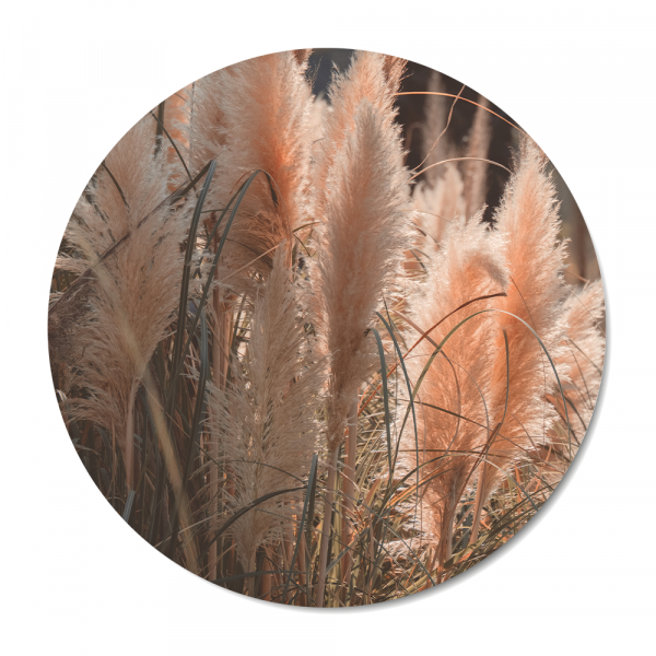 Cirkel - nature - pampass